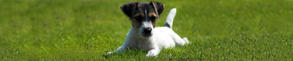 terrier-mix-care-001