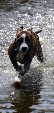 terrier-mix-exercise-001